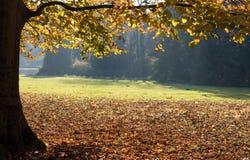 ulistnienie jesienna rama Obraz Royalty Free