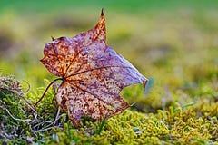 Ulistnienie liść w mech Obraz Stock