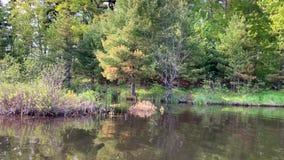 Ulistnienie od lasu na wody krawędzi Chippewa Flowage pokojowo odbija na wody powierzchni zbiory wideo
