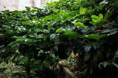 Ulistnienie rośliny Fotografia Royalty Free