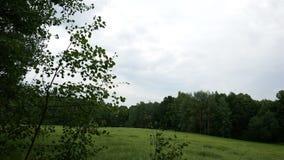 Ulistnienie w drzewach rusza się od wiatru Zielona trawa na polanie w lasowym Lekkim deszczu zdjęcie wideo