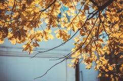 Ulistnienie w jesień parku Zdjęcie Stock