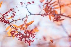 Ulistnienie w jesień parku Obraz Stock