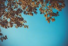 Ulistnienie w jesień parku Fotografia Stock