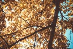 Ulistnienie w jesień parku Zdjęcia Royalty Free