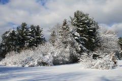 ulistnienie zima obraz stock