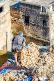 Ull i garveriet, Fez Arkivfoton
