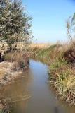 Ullal de Baldovi wetland Valencia province Spain Royalty Free Stock Photos
