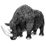 Ullig noshörning Arkivfoton
