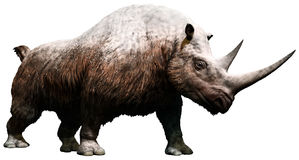 Ullig noshörning Royaltyfria Foton
