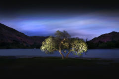 Ullswater Tree. A lone tree on the shore of Ullswater Lake in England's Lake District. The tree was lit over a long exposure by a single torch Royalty Free Stock Images