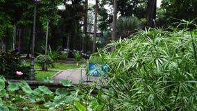 Ulmaceaebomen stock videobeelden
