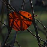 Ultima foglia dell'autunno Fotografia Stock