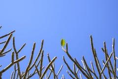 Ultima foglia sull'albero Fotografia Stock Libera da Diritti