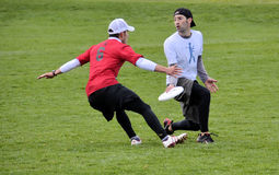 Ultimate Frisbee. Players battle in Bozeman Montana in the recent annual bozo tournament. The sport is currently one of the fastest growing in the nation Stock Photo