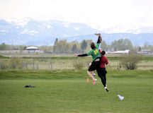 Ultimate Frisbee Battle. Ultimate Frisbee players battle in Bozeman Montana in the recent annual bozo tournament. The sport is currently one of the fastest Stock Photo