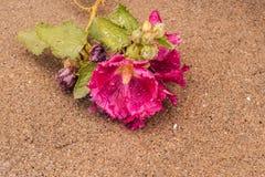 Ultimi fiori Fotografie Stock