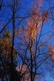 Ultimi giorni dell'autunno dorato Immagine Stock