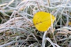 Ultimo foglio d'autunno Fotografia Stock
