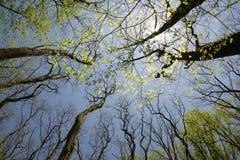 Ultra-brede hoekmening van gouden zonlicht in treetops stock foto's