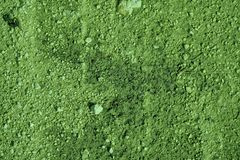 Ultra green Ground texture, sand surface, stone background.  Stock Photos