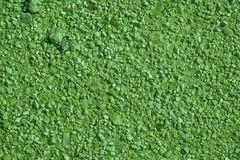 Ultra green Ground texture, sand surface, stone background.  Royalty Free Stock Photos