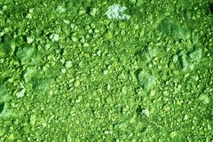 Ultra green Ground texture, sand surface, stone background, good for design element. S Royalty Free Stock Photos
