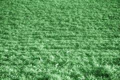 Ultra groene grastextuur van een gebied in de lente, ontwerpdetails Stock Foto
