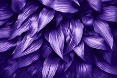Ultra Violet background made of fresh green leaves. Green dynamic backdrop for your design Royalty Free Stock Photography
