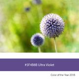 Ultra Violet Color of the Year - Allium flowers in sunlight Royalty Free Stock Photo