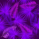Ultra violet seamless pattern of tropical leaves of palm tree. Vector background Stock Photos