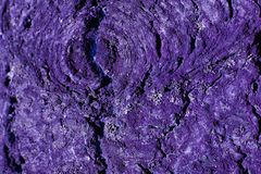 Ultra violet tree bark. stock image