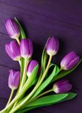 Ultra Violet Tulips on Ultra Violet Background royalty free stock image