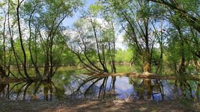 Ultra wide landscape panorama of the lake. Bundek in Zagreb. Under the trees stock video