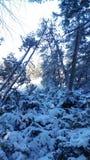 Ultra zimny zima dzień obraz royalty free