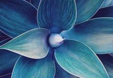 Ultrafioletowy abstrakcjonistyczny naturalny kwiecisty wzór Obrazy Stock