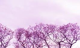 Ultrafioletowy naturalny tło z drzewami w jesieni, kolor rok obrazy stock