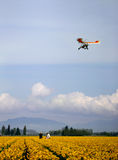 Ultralight plane. Above duffodil field Royalty Free Stock Image