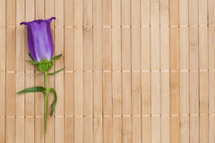 Ultramarine colored bellflower on beige bamboo napkin. Copyspace Royalty Free Stock Photos