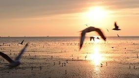 Ultrarapid av flygseagullfåglar under solnedgång på stranden lager videofilmer