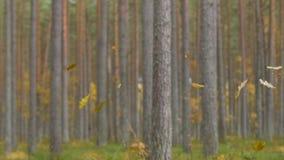 Ultrarapid av sidor som faller i skog lager videofilmer
