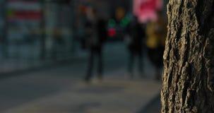 Ultrarapid sköt av suddigt folk som går på trottoaren i Stockholm Solbelyst ek i förgrunden lager videofilmer