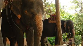 Ultrarapidbarn som håller ögonen på på elefanter på lantgård stock video