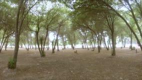 Ultrarapidpanna upp skott under trädmarkisen lager videofilmer