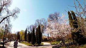 Ultrarapidskytte i Shevchenkoen parkerar på våren arkivfilmer
