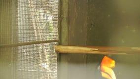 Ultrarapidturister som håller ögonen på på tukan i zoo lager videofilmer