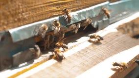 ultrarapidvideo en svärm av biflugor in i en bikupa mot efterkrav pollenbjörnhonungen jordbruk för biodlingbegreppsbi stock video