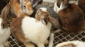 Ultrarapidzoolog som ser kaniner på lantgård arkivfilmer