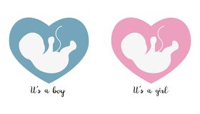Ultrasonography baby icons on the heart background. Ultrasonography baby icons on the heart background with text. Vector illustration Royalty Free Stock Images