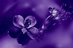 Ultraviolet natural fasionable background. Flowers and butterfly in motion.  Stock Images